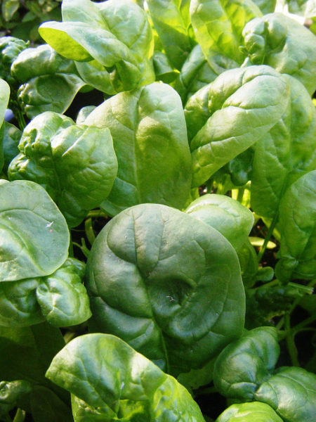 What $7 is Worth in Food - Spinach